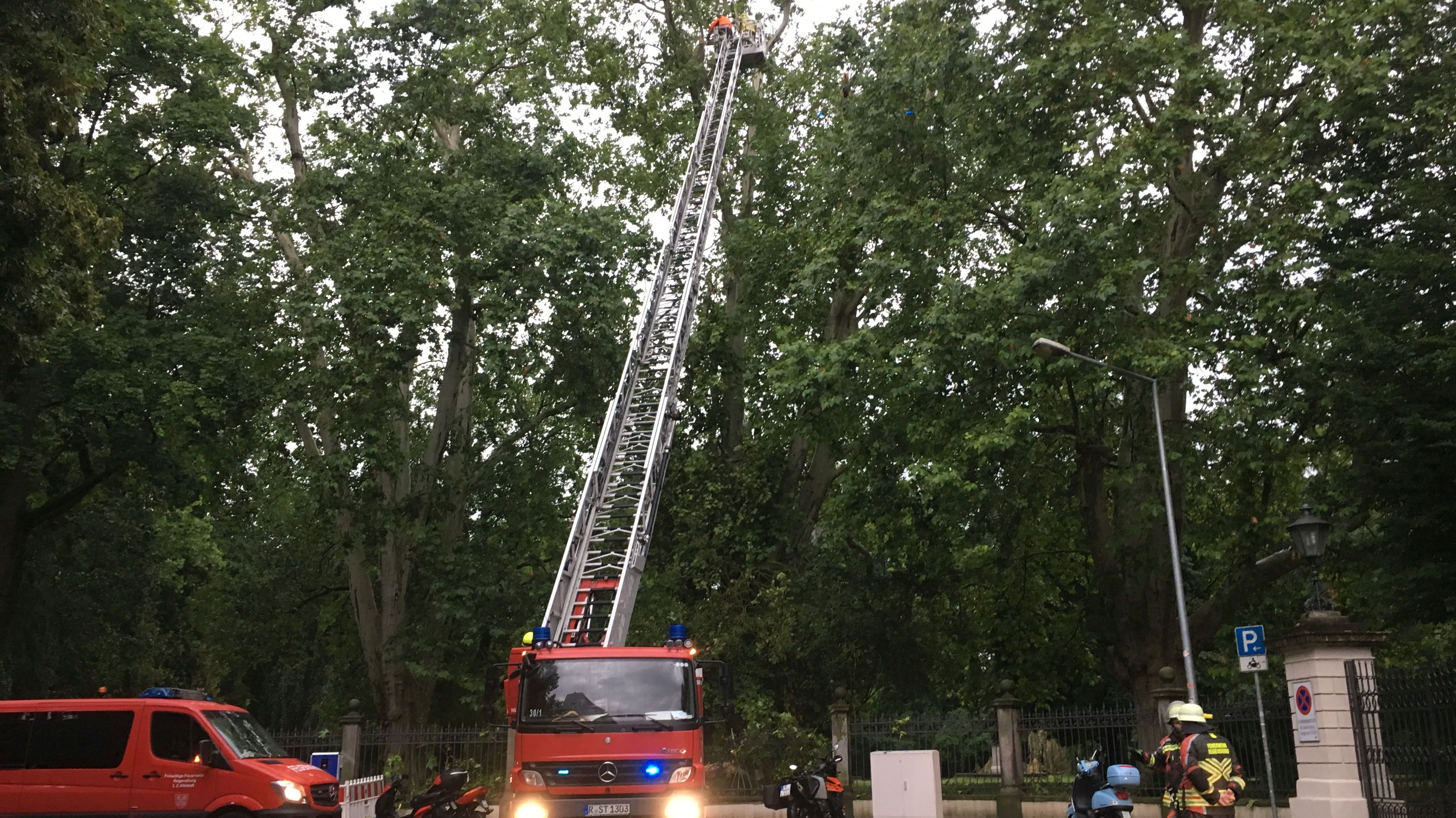 Feuerwehreinsatz am Schlosspark in Regensburg: Ein großer Ast hat den Zaun des Schlosses beschädigt