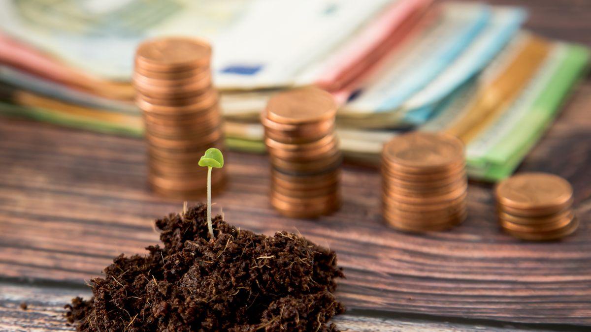 Pflanzenspross neben Euroscheinen und Geldmünzen