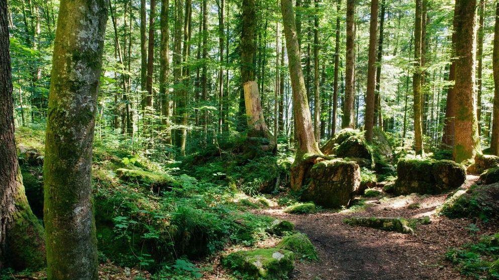 Wald bei Ruhpolding
