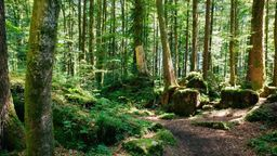 Wald bei Ruhpolding | Bild:BR