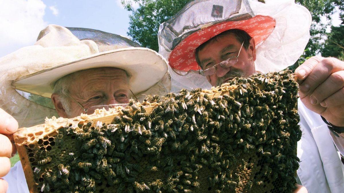 Bienensachverständiger und Imker überprüfen Bienenstock