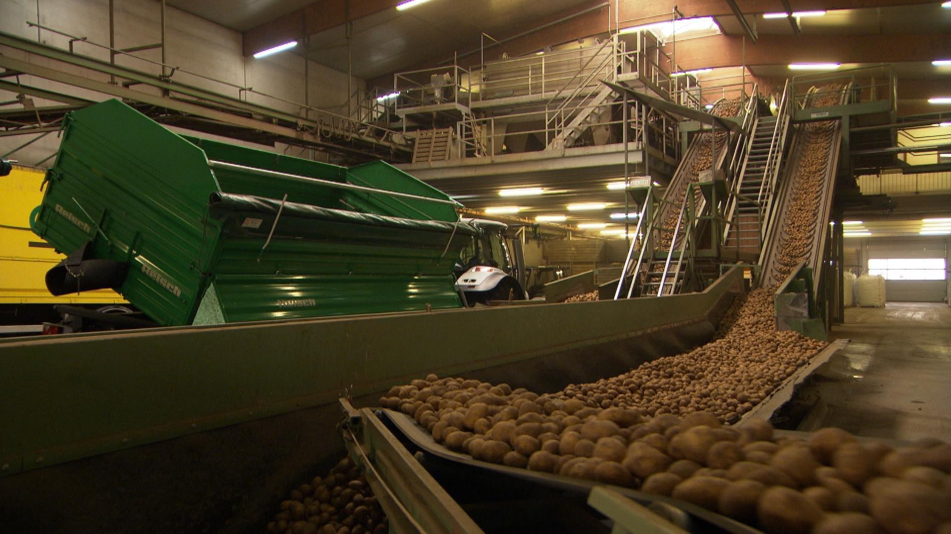 Fließbänder im Kartoffelpackbetrieb Agropa