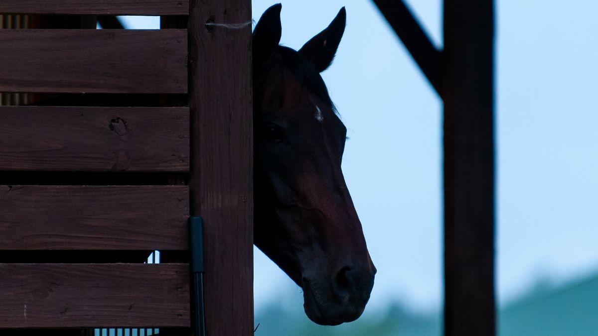 Ein Pferd schaut aus einem Unterstand heraus
