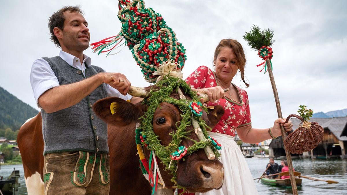 Nach dem Almabtrieb über den Königssee wird eine geschmückte Kuh vom Kahn geführt.
