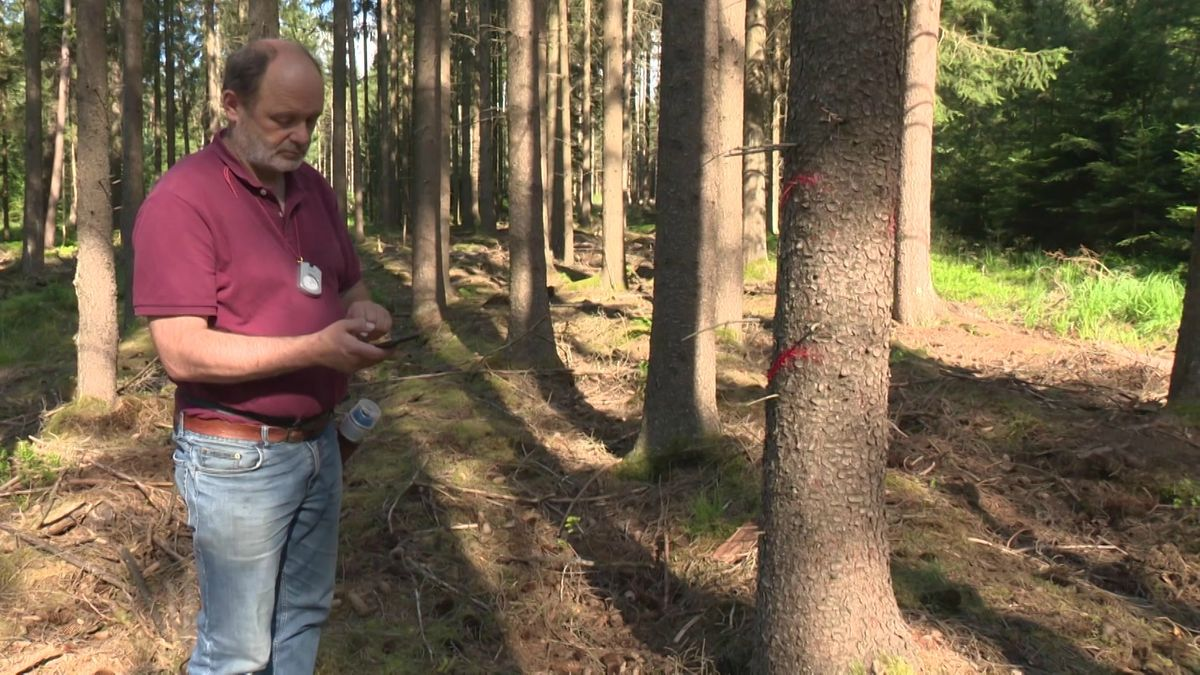 Immer öfter werden Waldarbeiter im Nürnberger Reichswald massiv angefeindet.