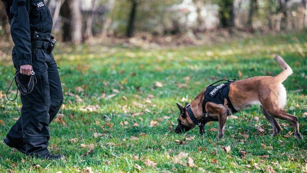 Symbolbild: Polizeihund bei Suchaktion
