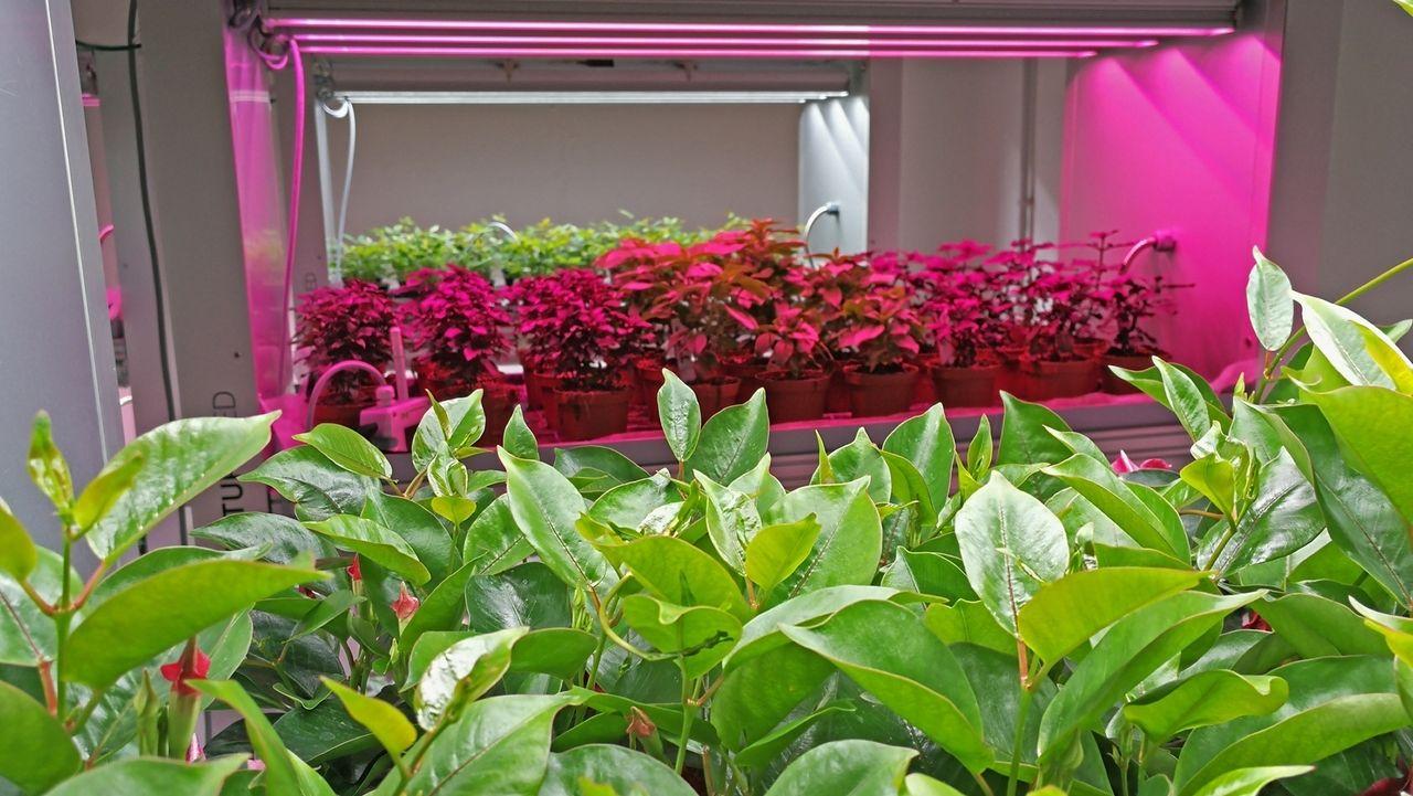 Pflanzenversuche mit farbigen LEDs