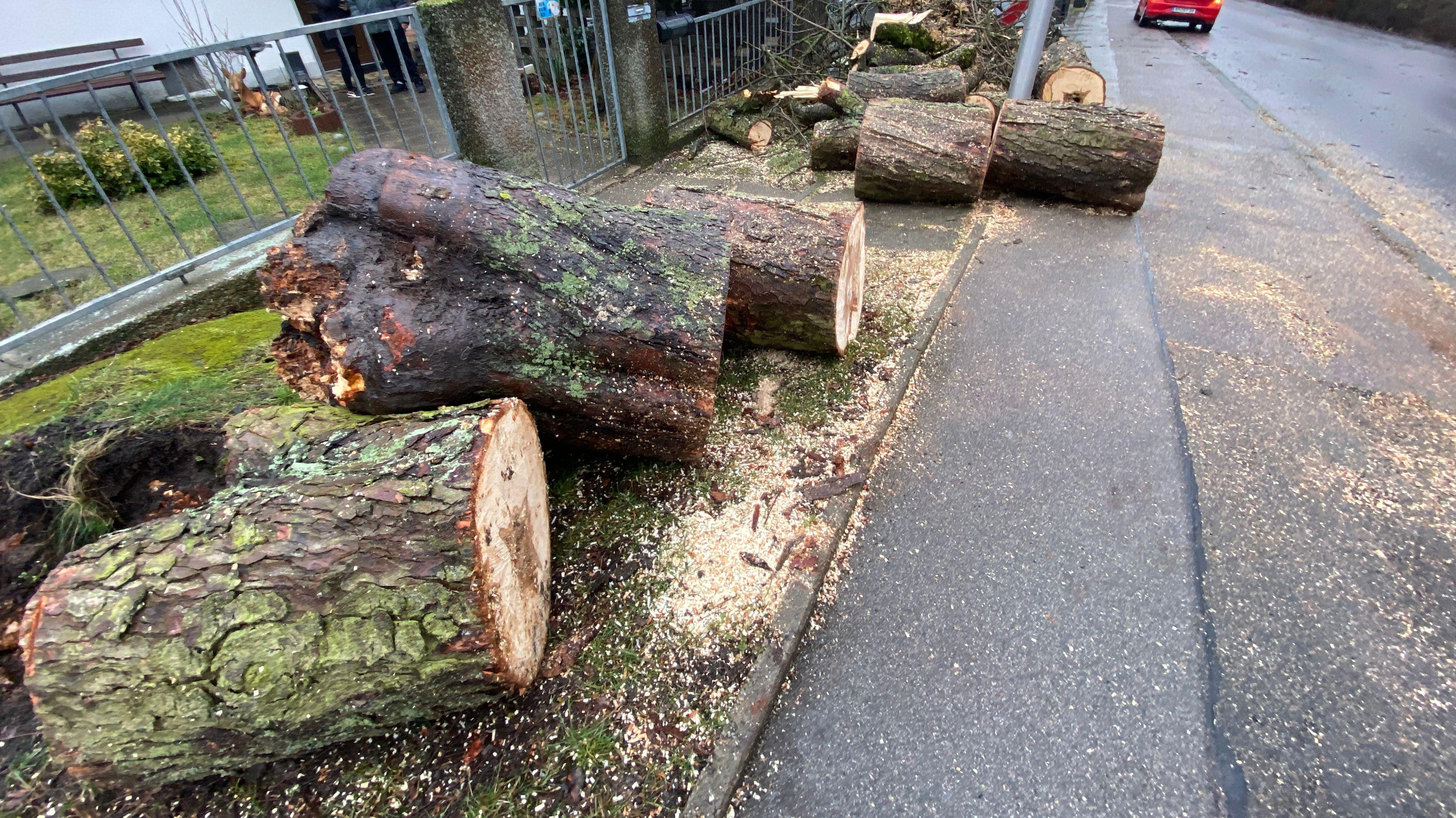 Abgesägte Bäume liegen auf dem Gehweg