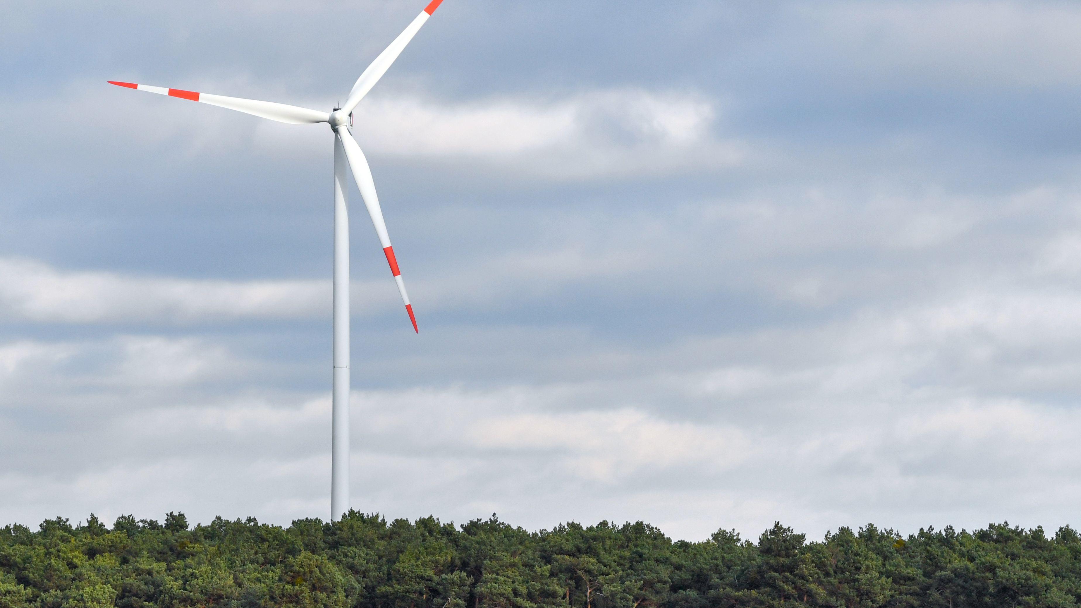 Windrad über einem Waldgebiet