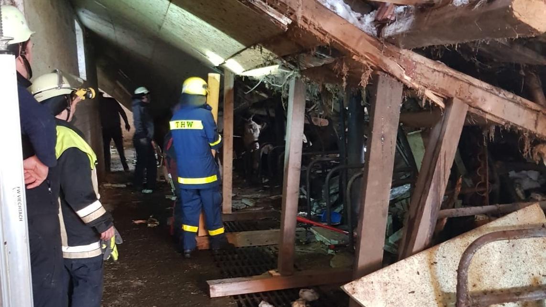 Einsatzkräfte retten Rinder aus dem eingestürzten Viehstall in Oed