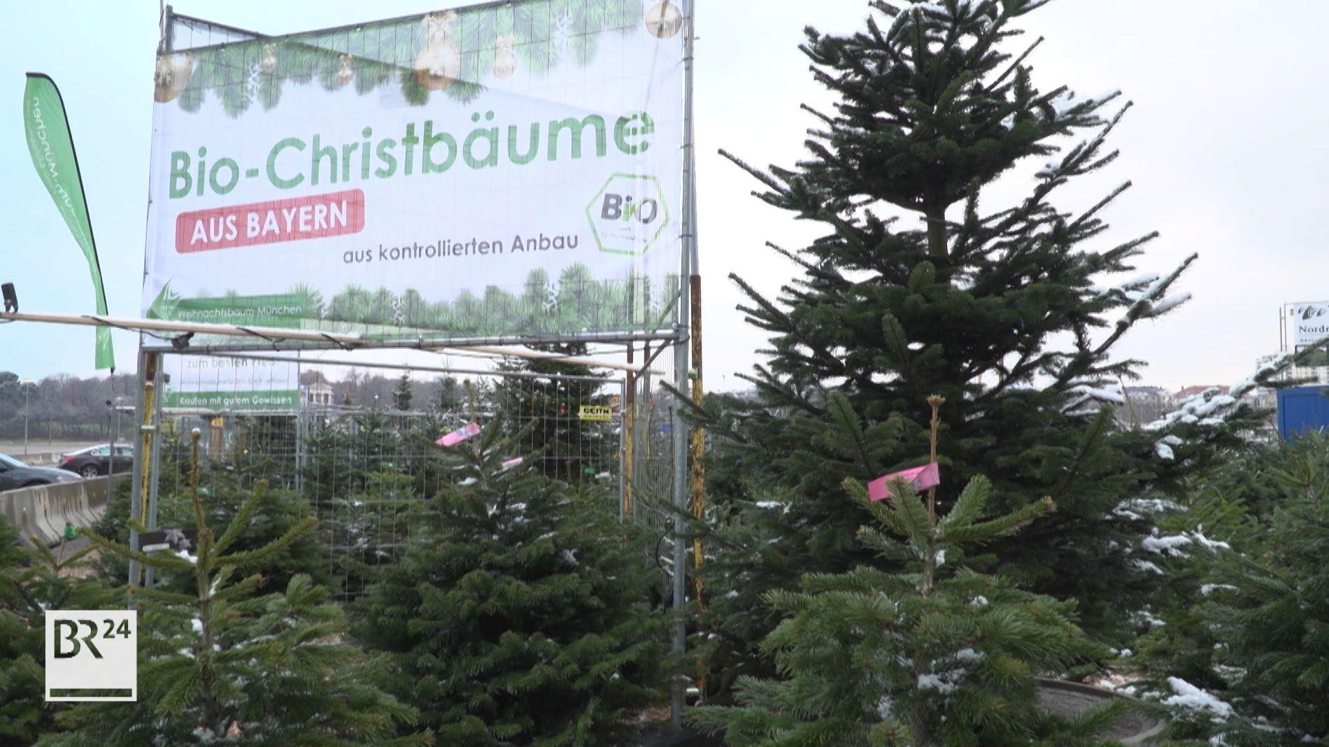 Ist ein Bio-Weihnachtsbaum sinnvoll?