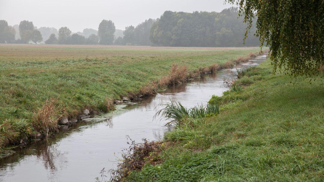 Ein Bach fließt durch eine Wiese
