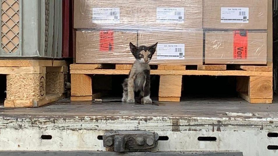 Katze hat Reise von Tunesien nach Unterfranken gut überstanden