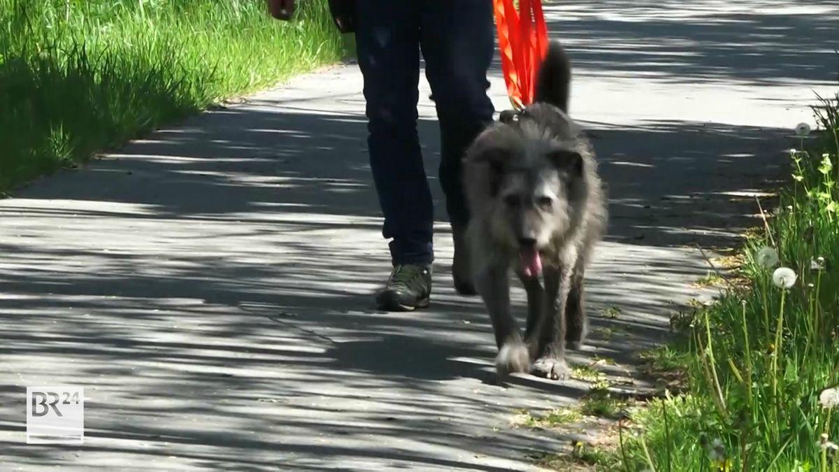Ein Suchhund wird von einem Hundeführer geführt.
