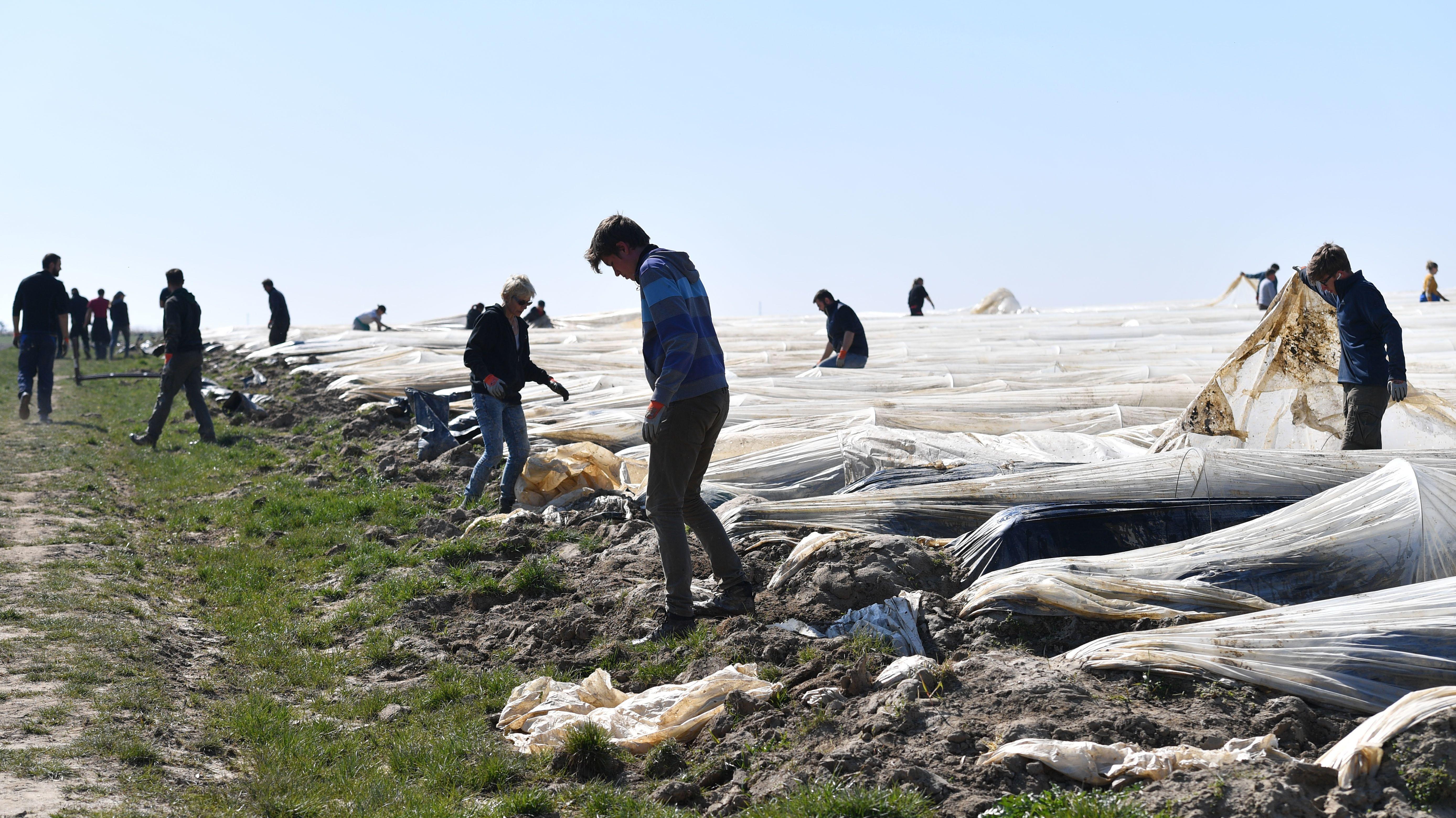 Erntehelfer: Arbeiter decken die Spargelfelder mit Plastikfolien ab. Am 02.04.2020 bei Sainbach im Kreis Aichach Friedberg.