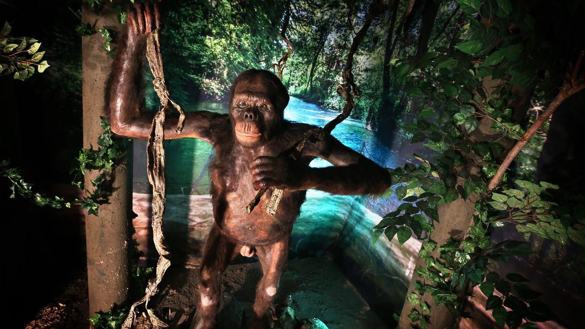 Zum ersten Jahrestag seines Fundes wurde diese Nachbildung von Menschenaffe Udo in Pforzen gezeigt.