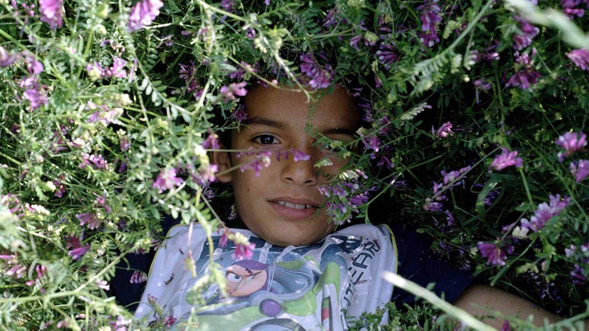 Ein Junge liegt halbversteckt in einer Blumenwiese und blickt in die Kamera