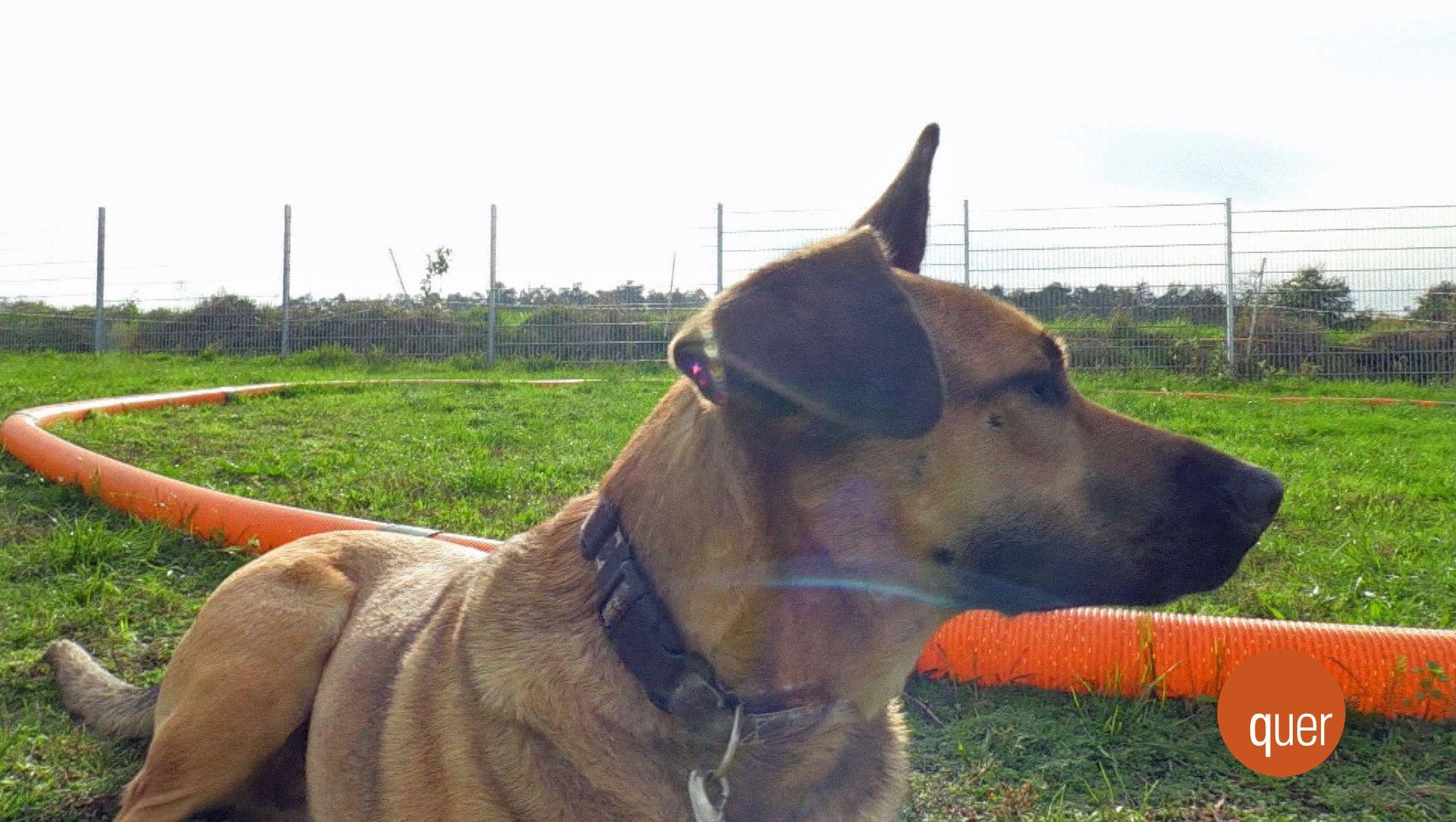 Ein Hund auf einem Übungsplatz im Lkr. Miltenberg.