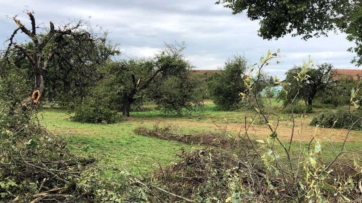Baumschäden bei Halfing