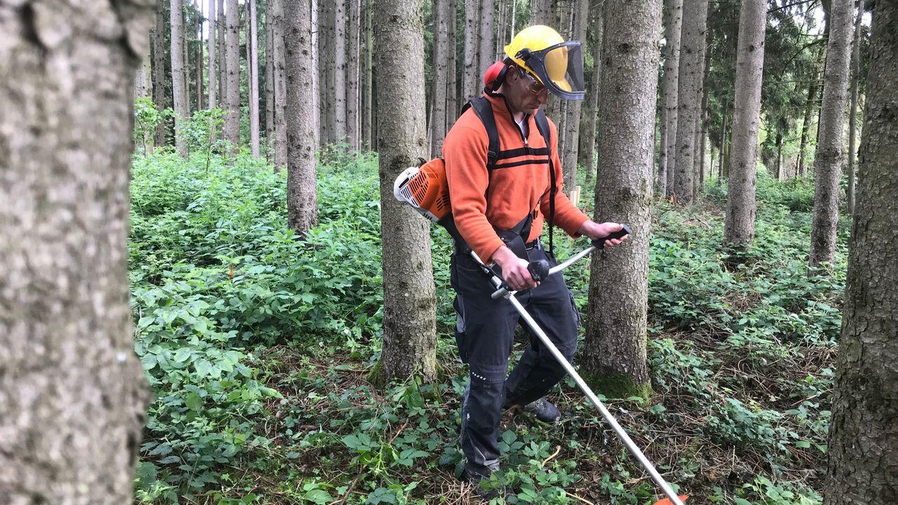 Andreas K. bei Waldarbeiten