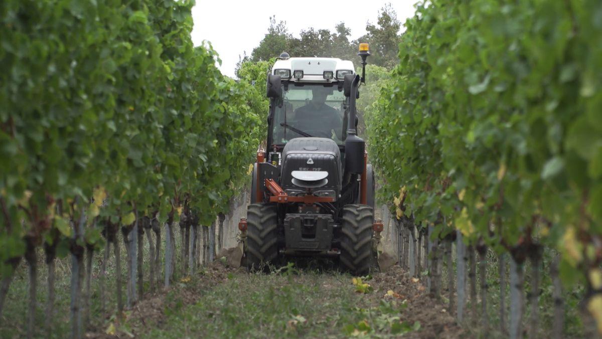 Neuartiger Traktor im Weinberg