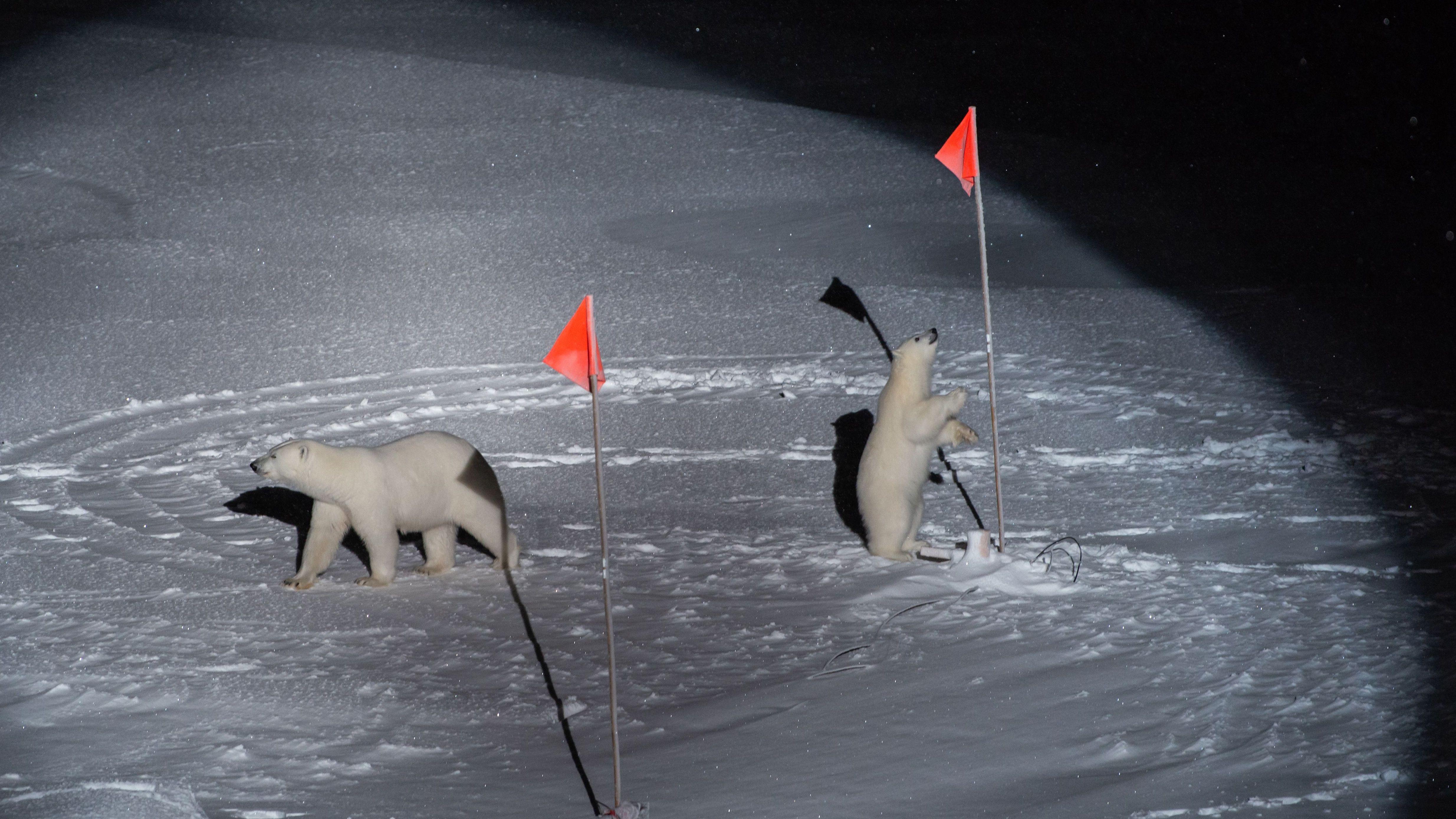 """Polarstern-Foto wird mit """"World Press Photo-Award 2020"""", Kategorie Umwelt, ausgezeichnet."""