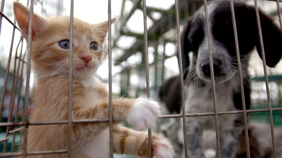 Katze und Hund warten auf einem Tiermarkt hinter Gittern auf Käufer.