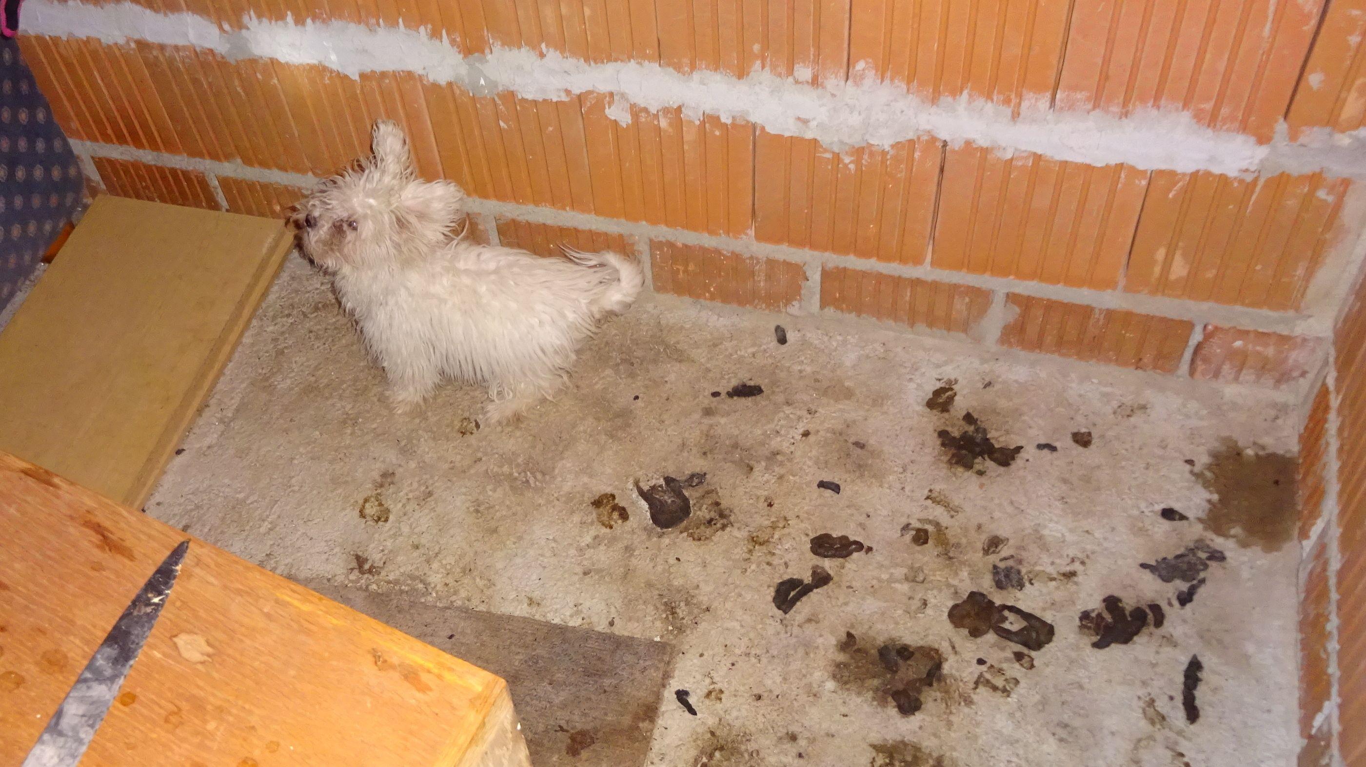 Der kleine Malteser-Mischling in seiner verdreckten Behausung