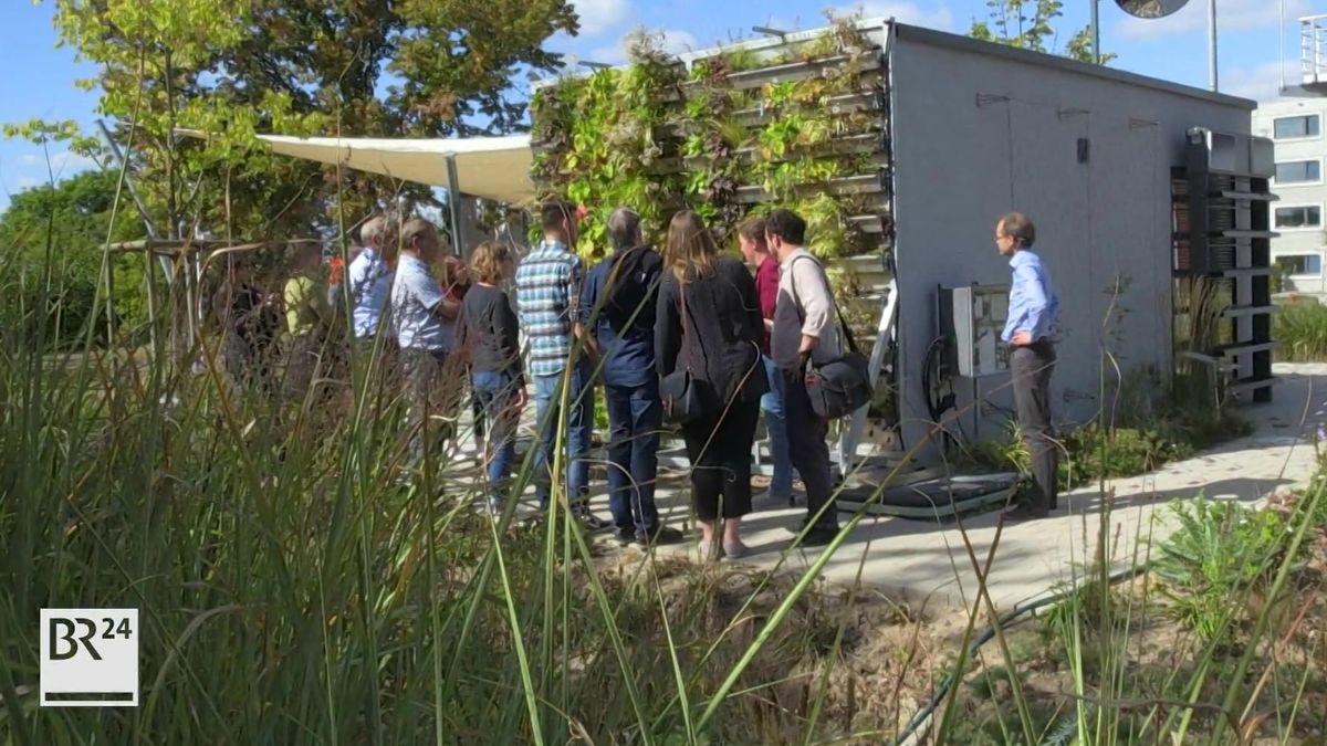 Experten begutachten das Modell einer begrünten Fassade auf dem ehemaligen Landesgartenschaugelände in Würzburg.