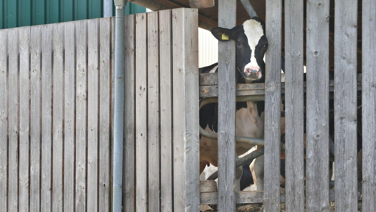 Nach dem Allgäuer Tierskandal sehen manche Landwirte eine Hetzjagd-Stimmung gegen Bauern.