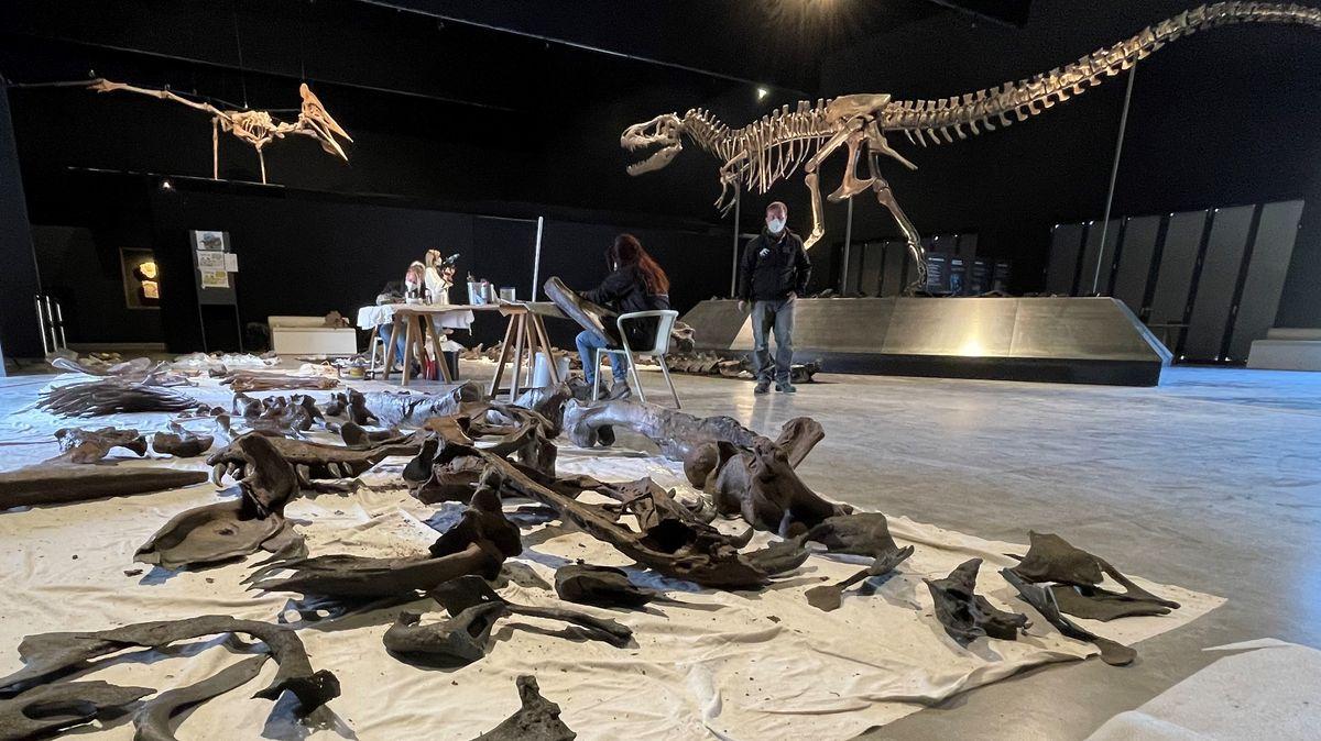 Tyrannosaurus-Rex-Knochen aus Kunststoff im Dinosaurier-Museum in Denkendorf