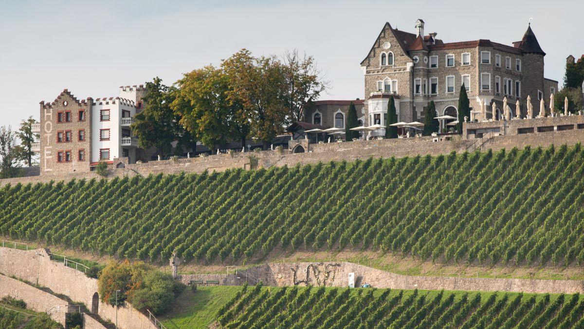 Weinberge am Würzburger Stein