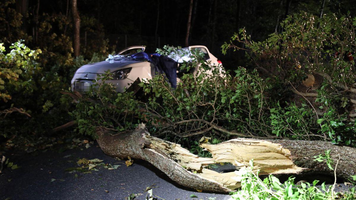 Im Hintergrund ein völlig demoliertes Auto, in dem ein Mann zu Tode kam - im Vordergrund die wuchtige Eiche, die er Föhnsturm zu Fall gebraht hat