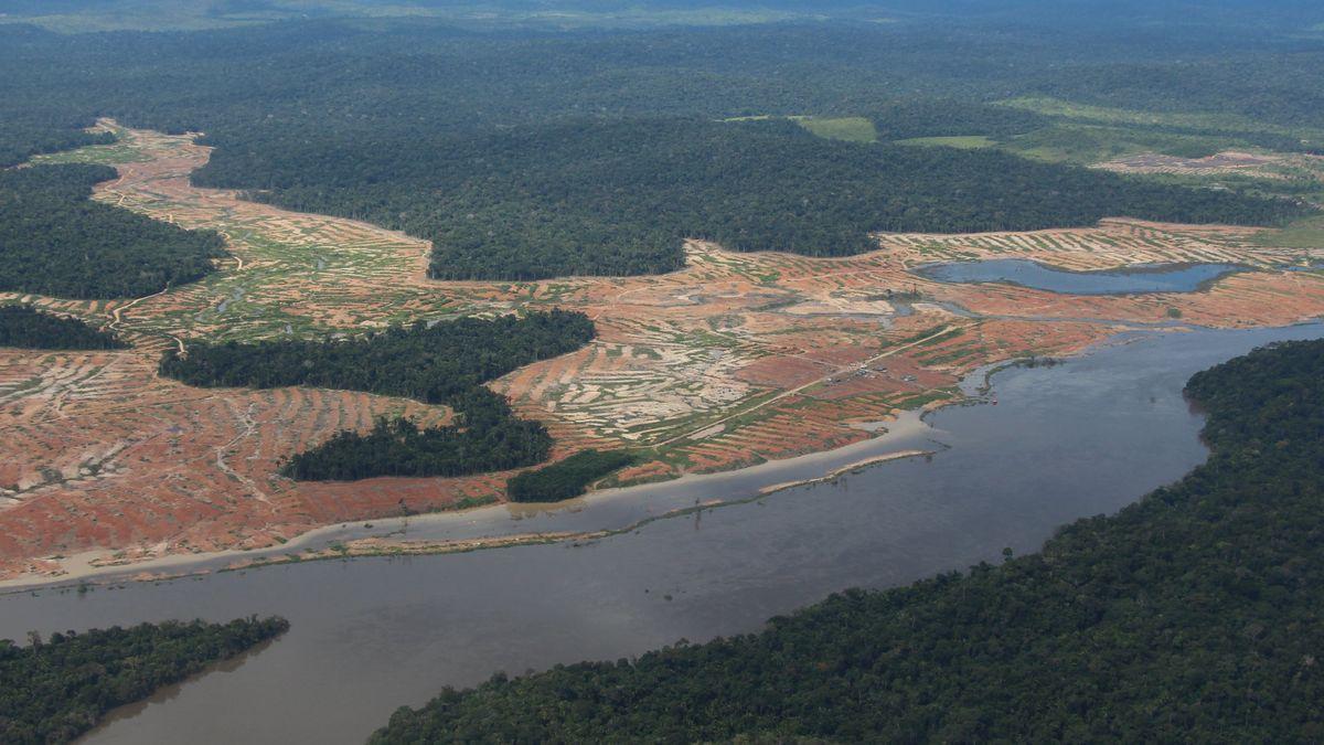 Rodung im Amazonas-Regenwald
