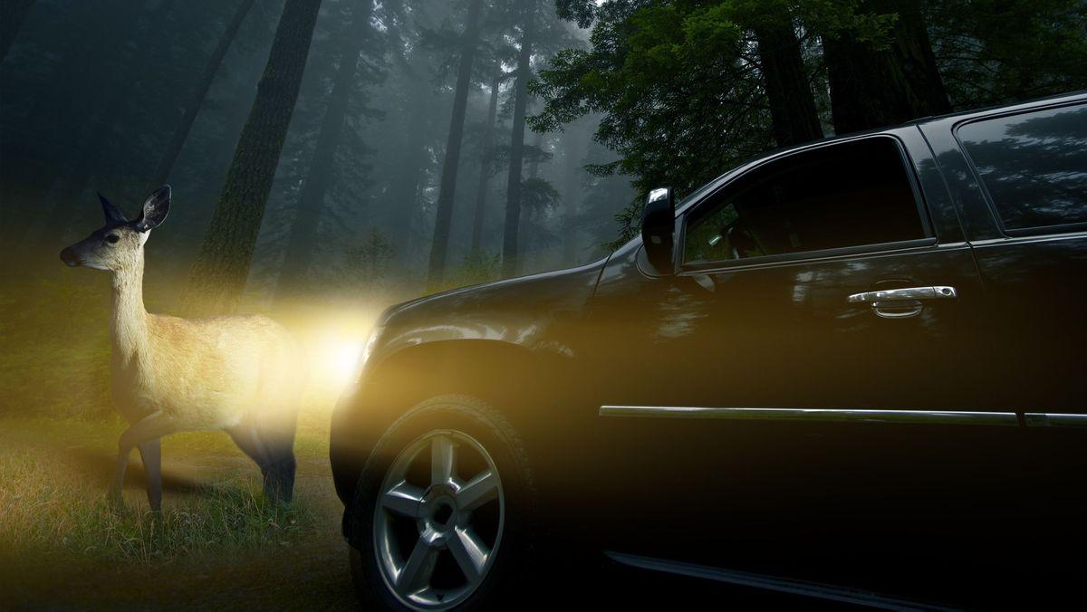 Reh wird von den Scheinwerfern eines Autos im Nebel angeleuchtet