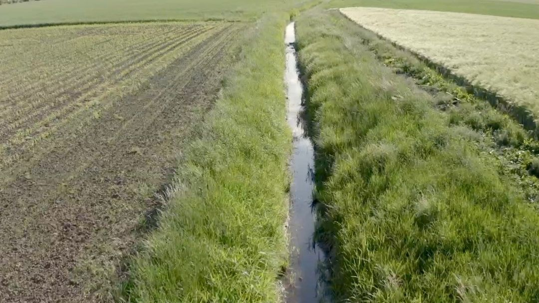 Gewässerrandstreifen zwischen bewirtschafteten Feldern.