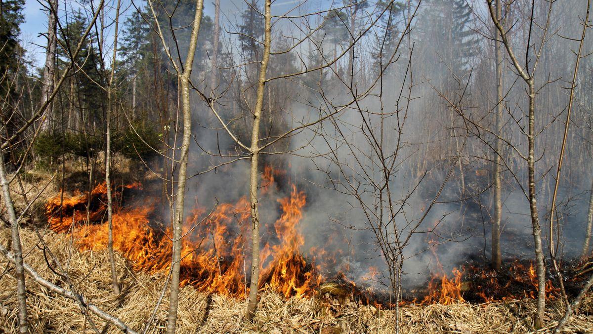 Feuer im Augsburger Stadtwald.