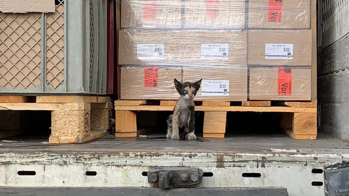 Katze reist in Lkw von Tunesien nach Kahl am Main