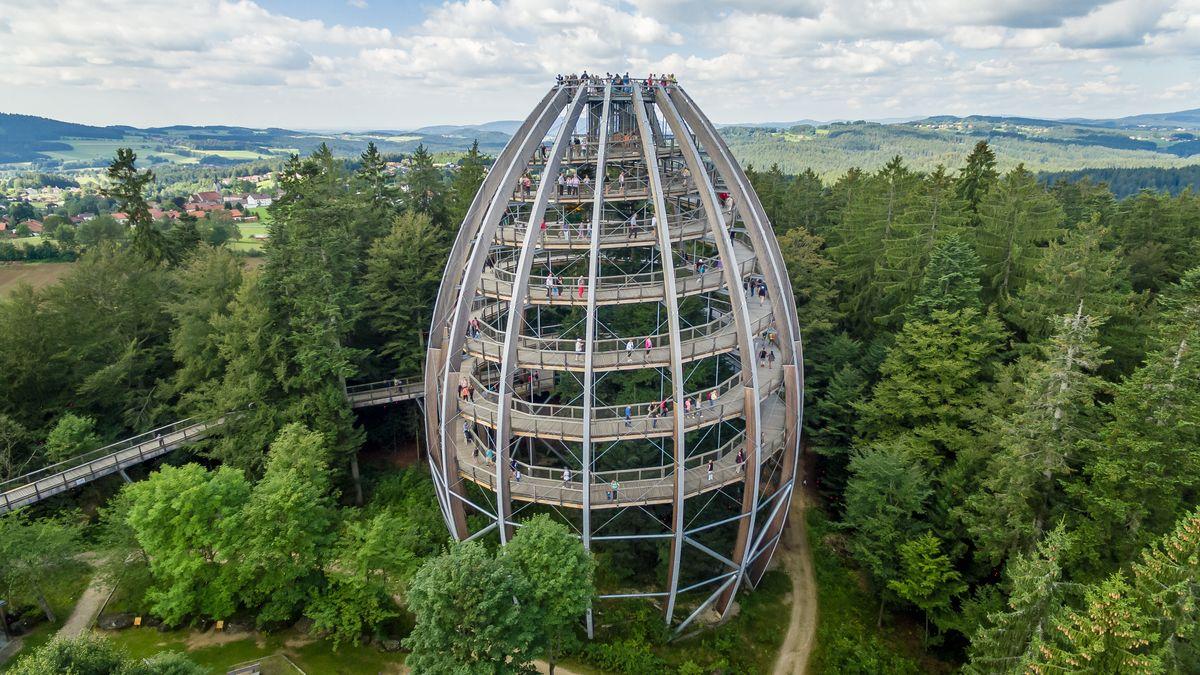 Der Aussichtsturm im Baumwipfelpfad ist 44 Meter hoch.