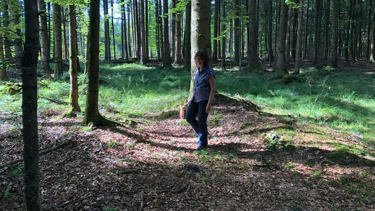 Petra Buchfellner beim Schwammerlsuchen im Bürgerwald bei Traunstein