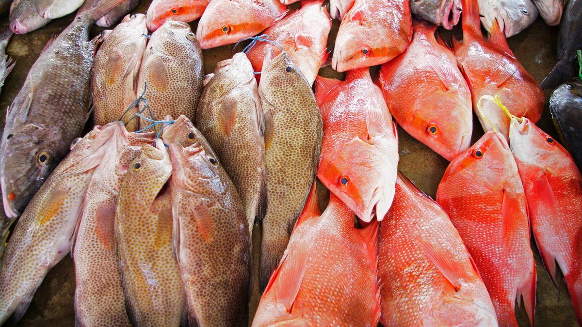 Fischmarkt Sir Selwyn Selwyn-Clarke Market in Victoria mit Red Snapper / Malabar-Schnapper / Roter Schnapper / Lutjanus malabaricus und anderen Fischen, Mahe, Seychellen