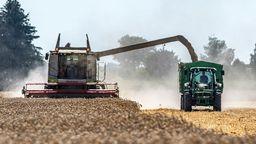 Bayern, Feldkirchen: Reifer Weizen wird auf einem Feld mit einem Mähdrescher abgeerntet. Wegen der Hitzewellen der vergangenen Wochen rechnet der Deutsche Bauernverband (DBV) für dieses Jahr mit einer deutlich schlechteren Getreideernte als bislang. | Bild:dpa-Bildfunk / Armin Weigel