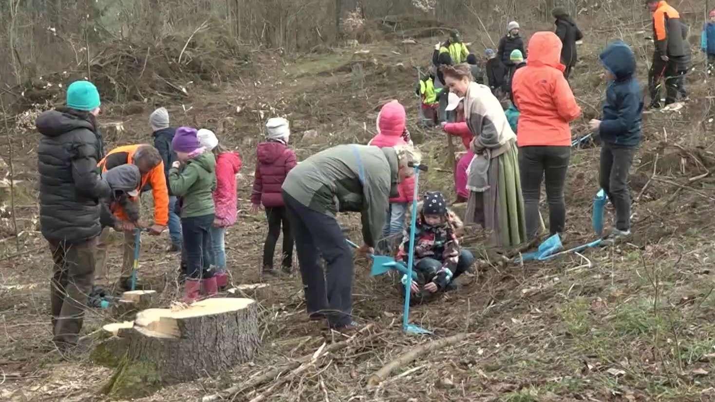 Grundschüler pflanzen Bäume