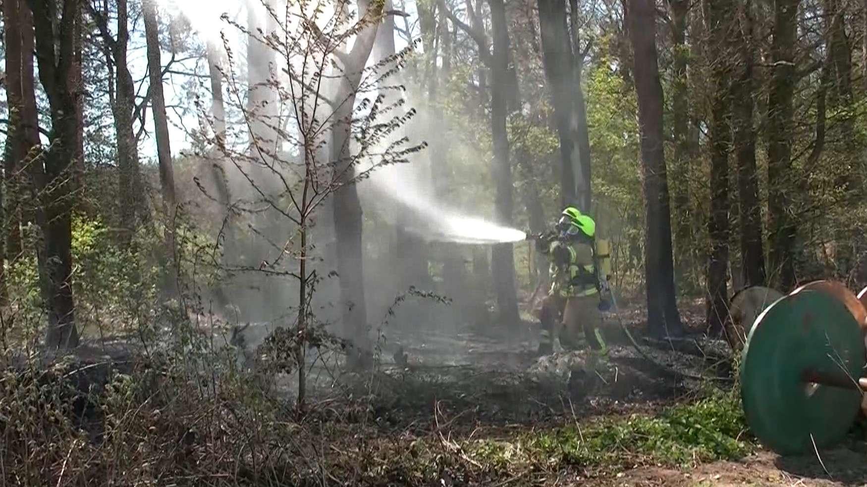 Feuerwehrleute bei Waldbrandbekämpfung
