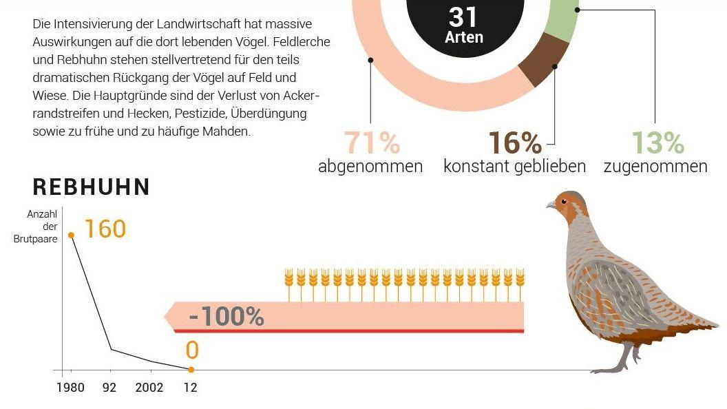 Auf die Feld- und Wiesenvögel wirkt sich besonders die intensivierte Landwirtschaft aus. Das Rebhuhn ist am Bodensee nicht mehr zu finden.