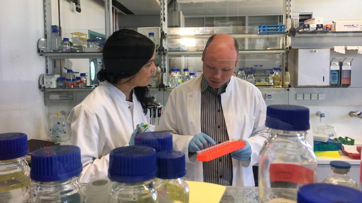 Wissenschaftler am Lehrstuhl für für Biochemie und Molekularbiologie der Universität Würzburg