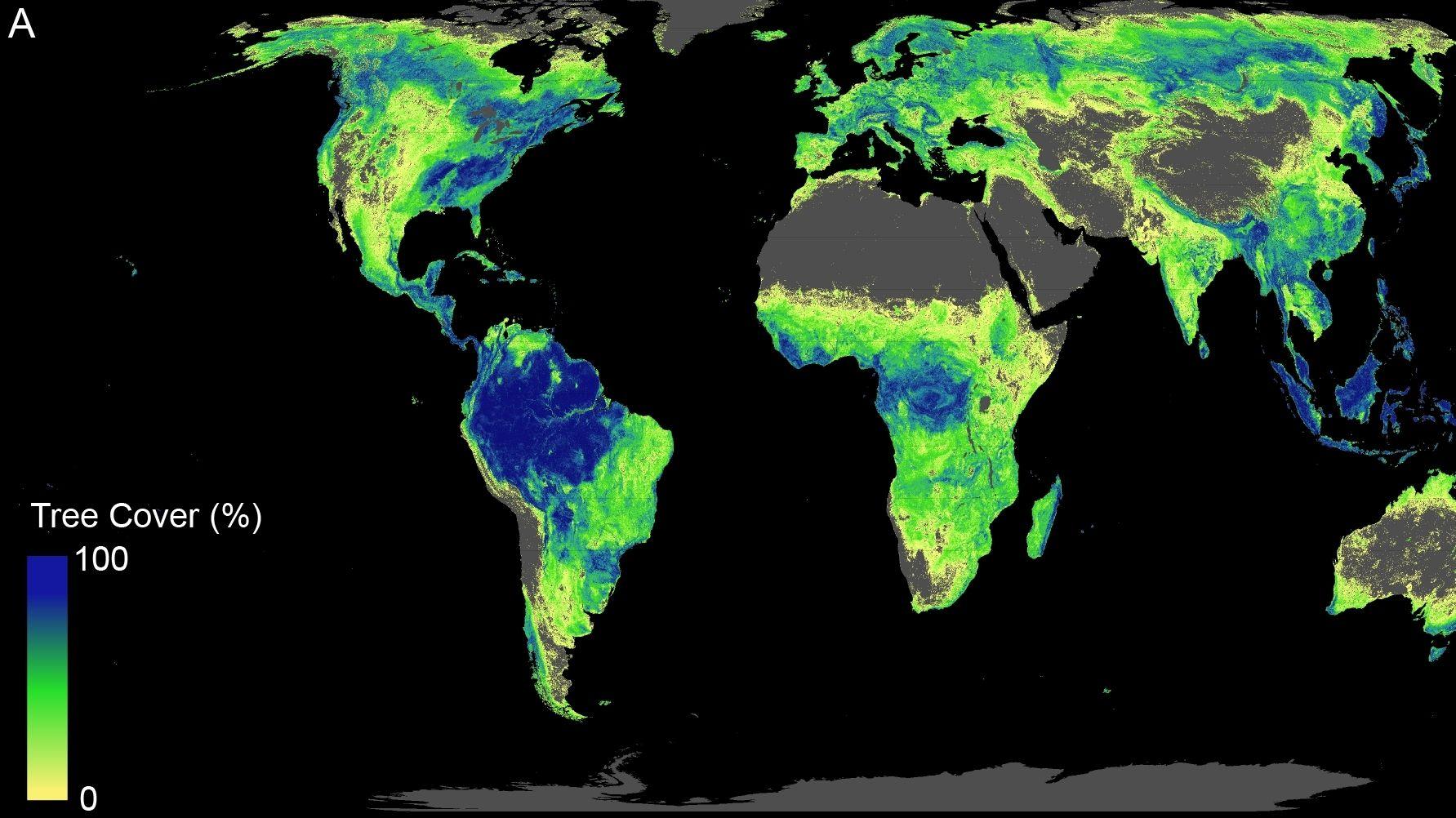 Weltkarte, Waldwuchs farbig markiert