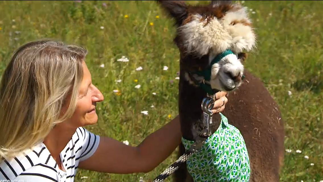 Alpakas retten Hof in Ginolfs