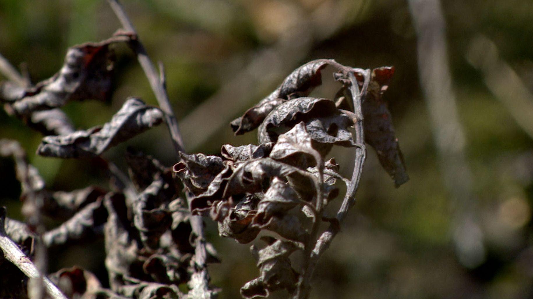 Vertrocknete Blätter