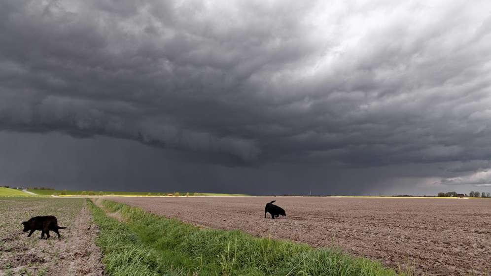 Aufziehende Gewitterwolken (Symbolbild) | Bild:picture alliance/chromorange/Rolf Poetsch